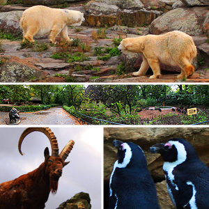 Zoologischer Garten Berlim